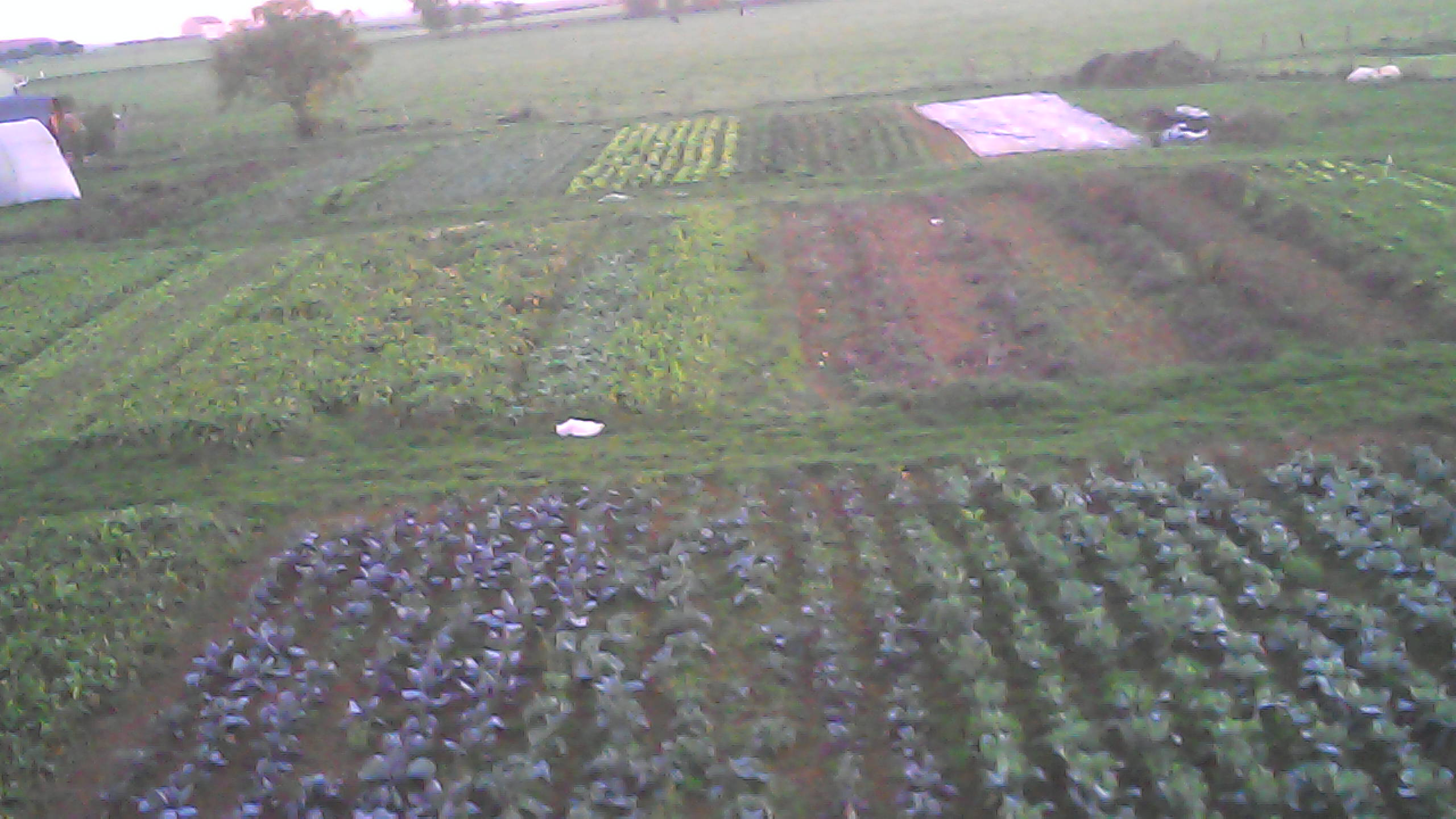 jardin oct 2015