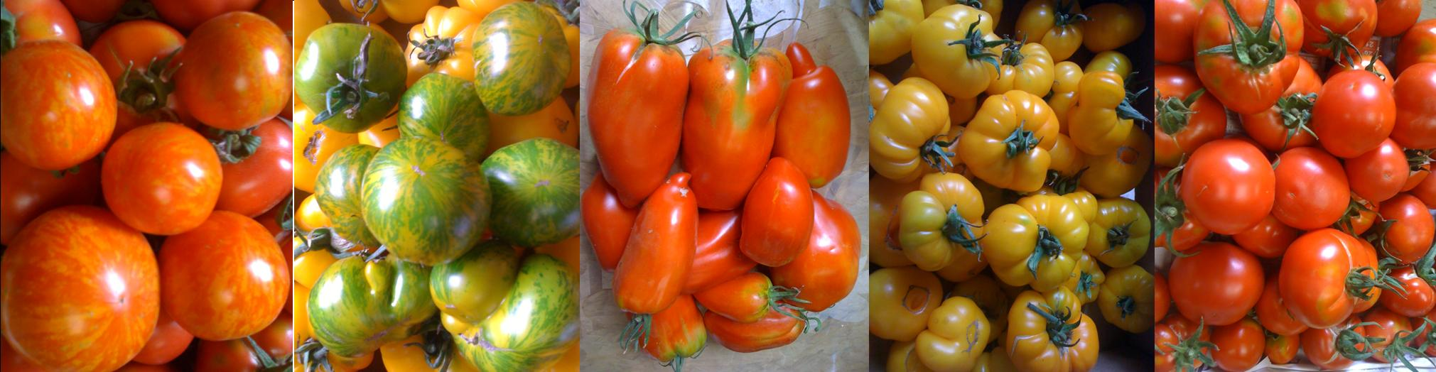 présentation tomates