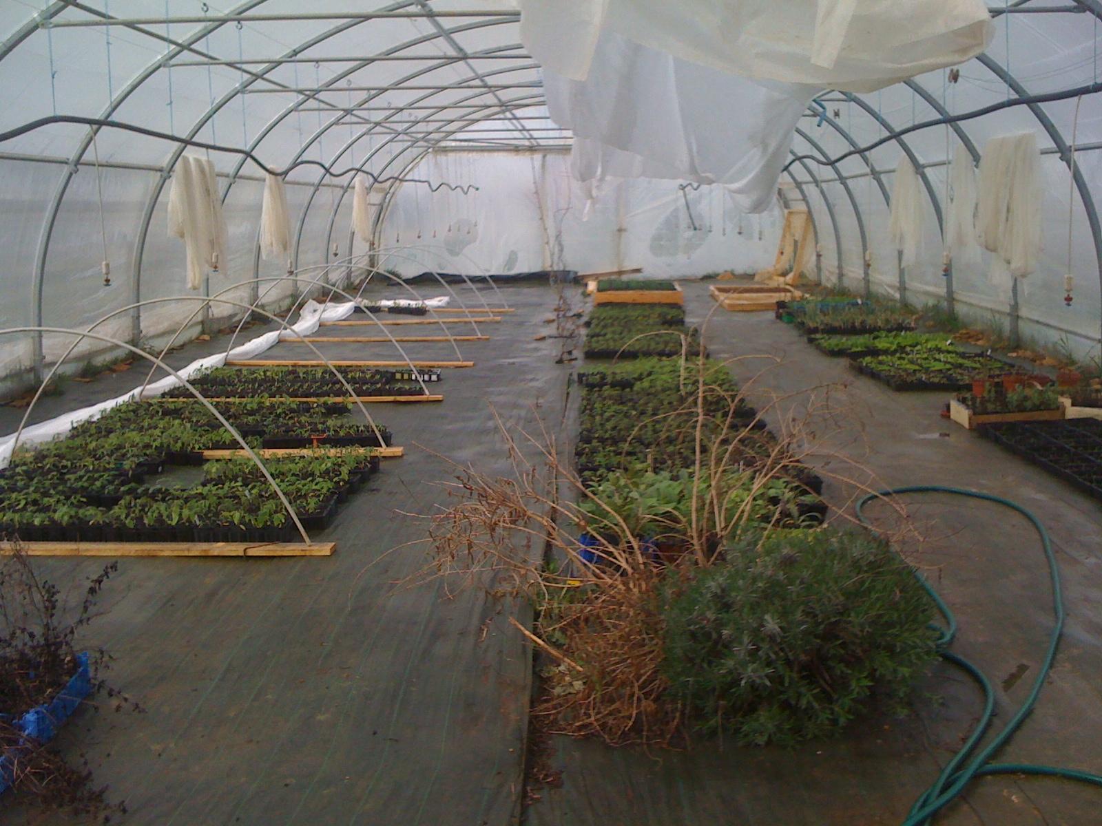 serre des plants