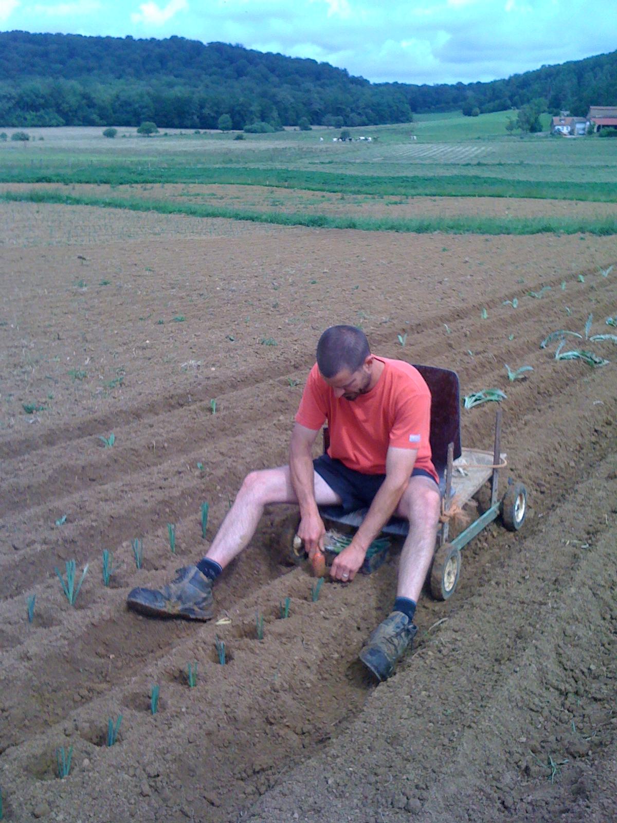 plantation des poireaux